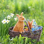 Frühling ist schon bald - Machen Sie mit bei unserem Suchspiel! (© Maya Kruchancova − Fotolia.com)