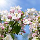 Frühling lässt sein blaues Band … - Machen Sie mit bei unserem Suchspiel! (© K.-U. Häßler − Fotolia.com)