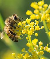 Das Summen der Bienen im Juni … - Machen Sie mit bei unserem Suchspiel! (© Yuval Helfma − Fotolia.com)