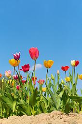 Der Frühling kommt! - Machen Sie mit bei unserem Gewinnspiel! (© mahey   − Fotolia.com)