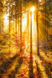 Herbstliches im goldenen Oktober - Machen Sie mit bei unserem Gewinnspiel! (© eyetronic  - Fotolia.com)