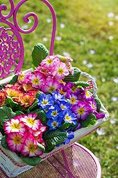 Frühlingsboten im März - Machen Sie mit bei unserem Gewinnspiel! (© DoraZett - Fotolia.com)