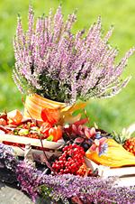 das Heidekraut – Pflanze des Monats November