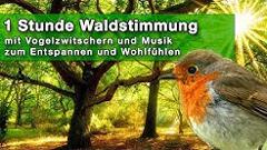 Neuestes Video bei YouTube: Waldstimmung mit Naturgeräuschen